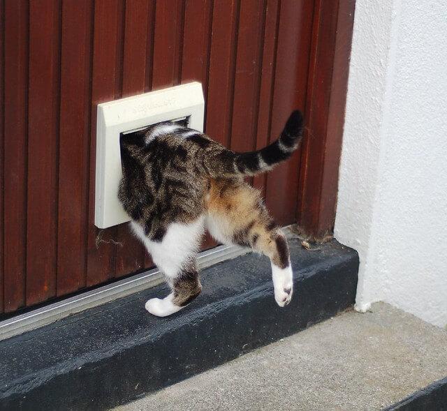 cat flap security